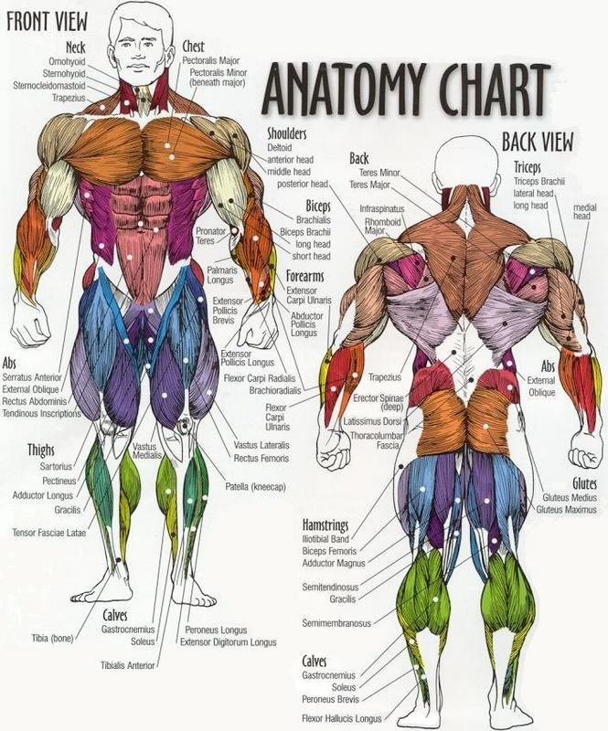 Upper Side Body Diagram http://nowheelchair.wordpress.com/tag/theraband/